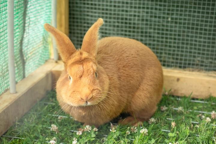 Ini daftar 10 informasi penting cara merawat kelinci